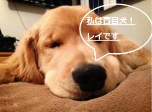 盲目の子犬